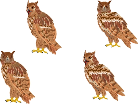 Owl birds set isolated on white vectors Illustration