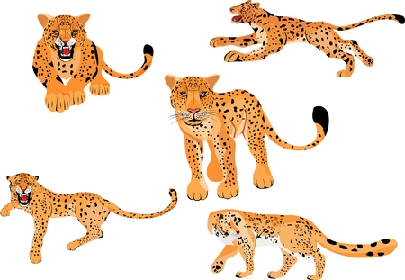 Leopards vector illustration isolated set. Big powerfull wild cats in different poses. Illustration