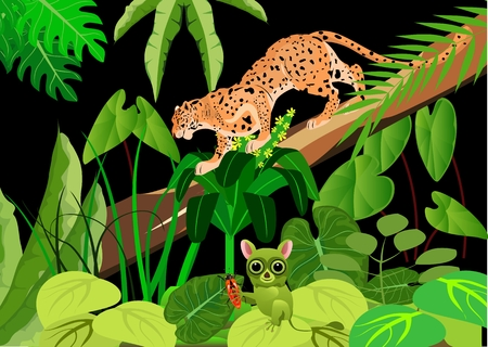 Leopard and tarsier in the night jungle, wildlife theme, background. Illustration