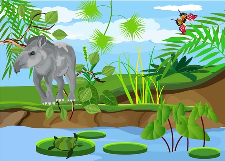 Tapir mammal animal standing on the river bank.