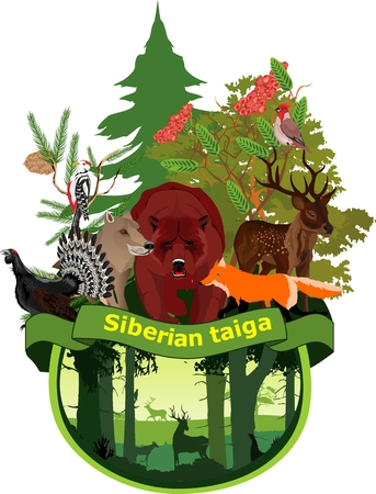Siberian taiga forest, concept vector illustration, bear, wolf, deer animals Nature save concept illustration Illustration