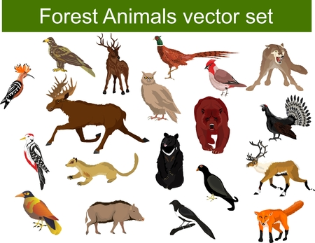 Woodland animals mega set vector illustration, deer, bear, pheasant, eagle, owl,capercaillie, hoopoe, marten Stock Illustratie