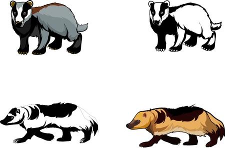 Texugos e Wolverines isolado ilustração vetorial, isolado no branco