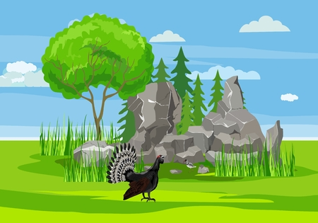 Capercaillie on the forest glade, nature outdoor landscape, wildlife concept vector illustration