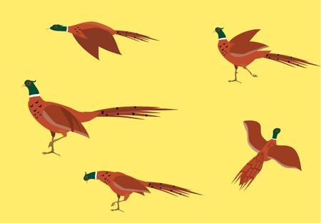 Pheasants birds isolated on white vector set