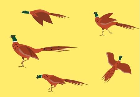 Pheasants birds isolated on white vector set
