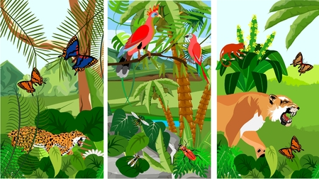 Jungle scene vertical banner illustration with Bird of Paradisea, puma, parrots, butterflies, exotic plants, rainforest fauna, vector illustration