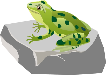 Green frogg sitting on the stone, vector illustration 矢量图像