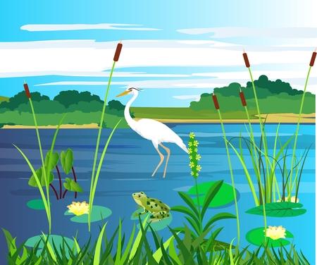 White heron and frogg on the lake