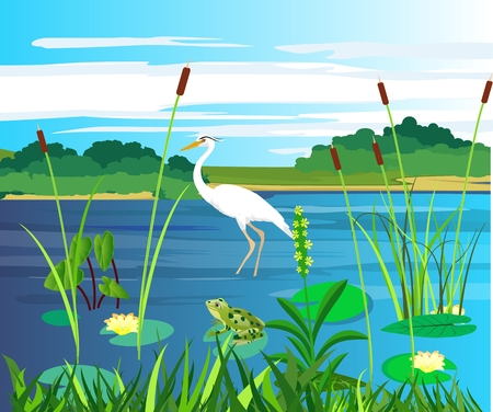 White heron and frogg on the lake