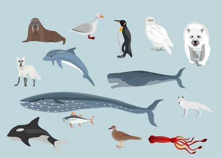 Set of Arctic animals waterfowl Illustration