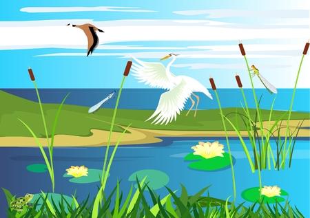 White heron, goose flying, lake, gragonflies, wetland landscape, vector wildlife