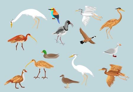 Vector birds set, vector illustration