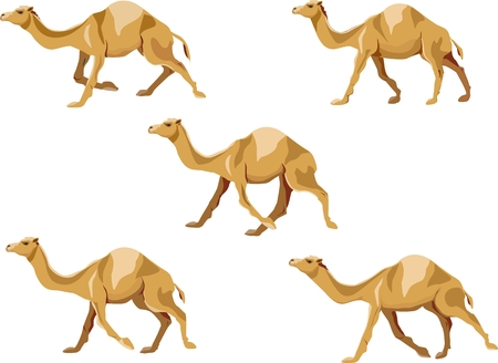 Camels running various poses illustration set, isolated vector illustration