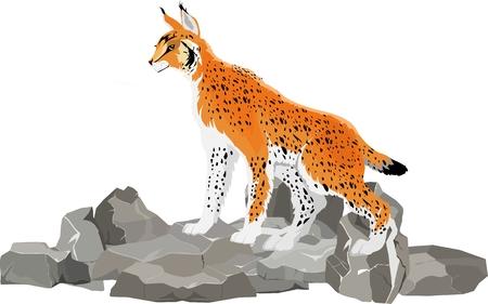 Lynx wild cat on the stone, isolated vector illustration