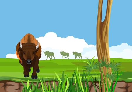 Big bison in the american prairie, wildlife landscape grass vector concept illustration 向量圖像