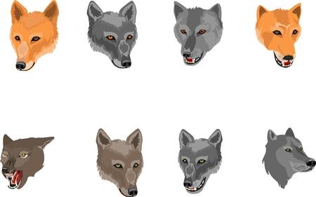Wolvess heads set isolated on white vector illustration Illustration