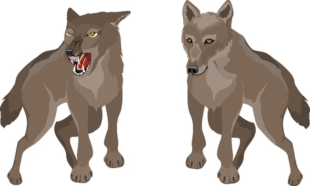 Couple of animals in different poses, isolated vector illustration Illustration