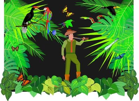 Jungle theme, wildlife theme, wildlife theme, butterflies, snake