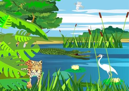 Jaguar, american pantanal