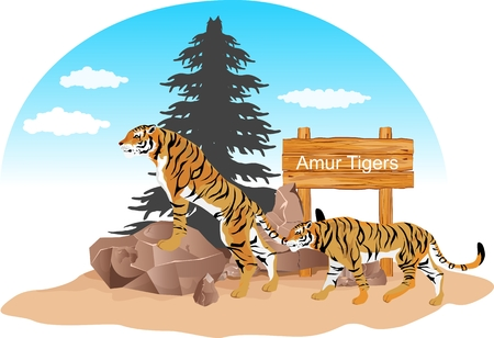 Two Siberian tigers on stone in Siberian forest, vector illustration
