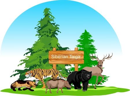 Concepto de animales del bosque de taiga siberiana