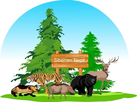 Siberian taiga forest animals concept Illustration
