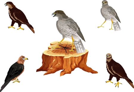 Falcon hunting for bustard bird, traditional arabian hunting vector Stock Illustratie