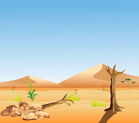 Desert landscape wildlife vector