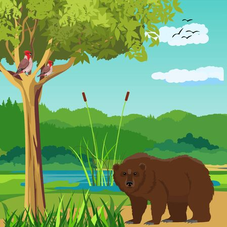 Bear standing in the forest, nature river landscape in background vector.