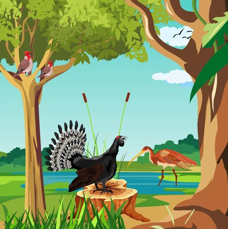 Wood grouse sitting on the stump in  the forest, nature river landscape in background vector.