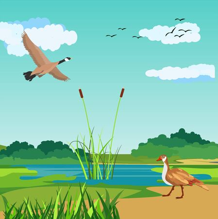 Wild gooses in nature, river landscape in background vector.