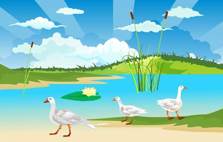 Wild goose on the river bank, wildlife nature vector illustration