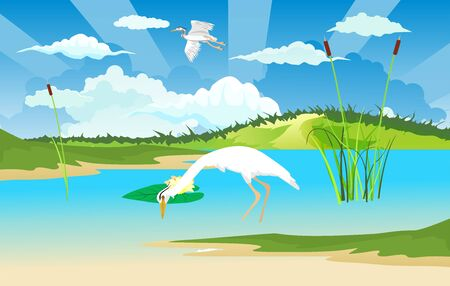 White heron on the river bank, wildlife nature vector illustration