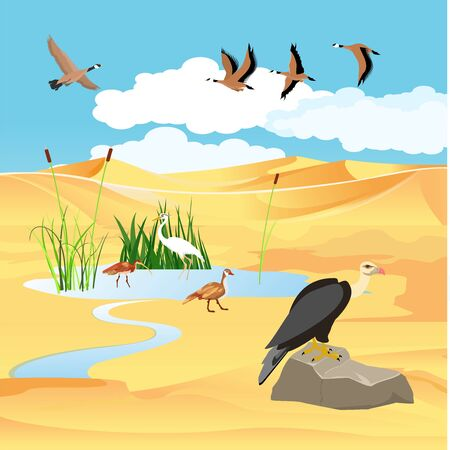 Desert lake and wild birds, wildlife scene, vector landscape