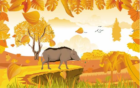 landscapes of Countryside in autumn. wild boar in wildlife scene, mid autumn with field, grass, forests,  and leaves falling from trees in yellow foliage. Pretty landscape in fall season.