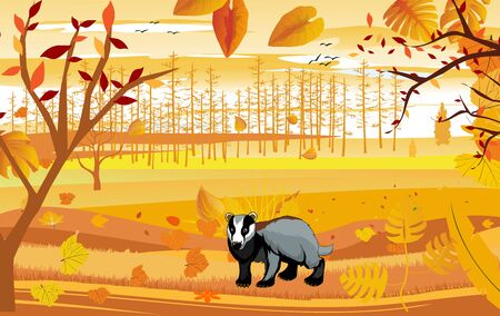 landscapes of Countryside in autumn. Badger in wildlife scene, mid autumn with field, grass, forests,  and leaves falling from trees in yellow foliage. Pretty landscape in fall season.