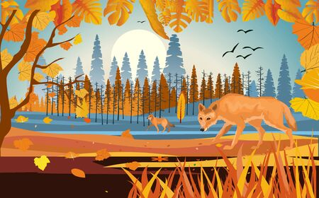 landscapes of wildlife in autumn. Wolf in wildlife scene, with field, grass, forests, and leaves falling from trees, vector
