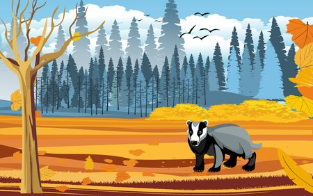 landscapes of wildlife in autumn. Badger in wildlife scene, with field, grass, forests, and leaves falling from trees