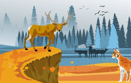 landscapes of wildlife in autumn. Deer in wildlife scene, with field, grass, forests, vector 일러스트