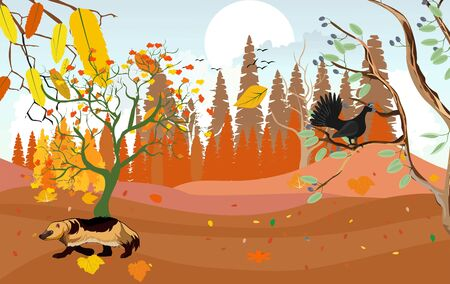 landscapes of wildlife in autumn. Volverine and capercaillie in wildlife scene, with field, grass, forests, vector