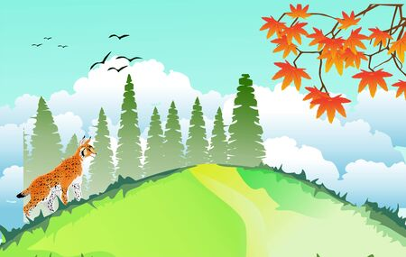landscapes of wildlife in summer. Lynx in wildlife scene, with field, grass, forests, and leaves falling from trees