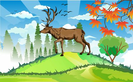 landscapes of wildlife in summer. Deer in wildlife scene, with field, grass, forests, and leaves falling from trees