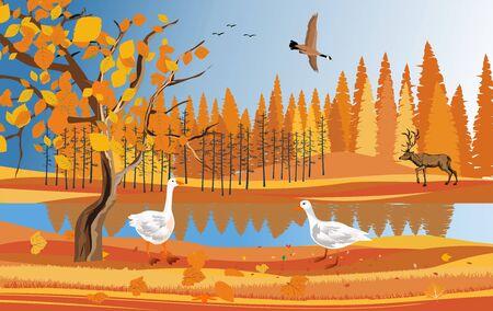 Golden autumn in the forest landscape, pretty wildlife landscape vector