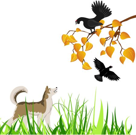 The  dog on the hunt, the black grouse on tree branch  vector illustration.