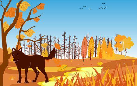 The wolf on wildlife,  golden autumn forest landscape, vector illustration.