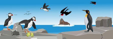 Sea birds on the rocks, rookery panoramic vector illustration