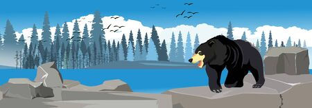 Grey winter in northern forest, black bear walking, panoramic, horizontal vector illustration