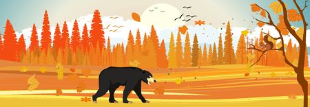 Golden autumn in northern forest, black bear walking, panoramic, horizontal vector illustration