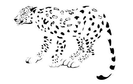 Illustration of leopard, monochrome  vector animal, isolated on white